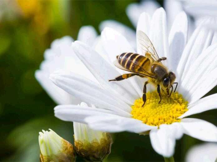 honey stimulates hair growth