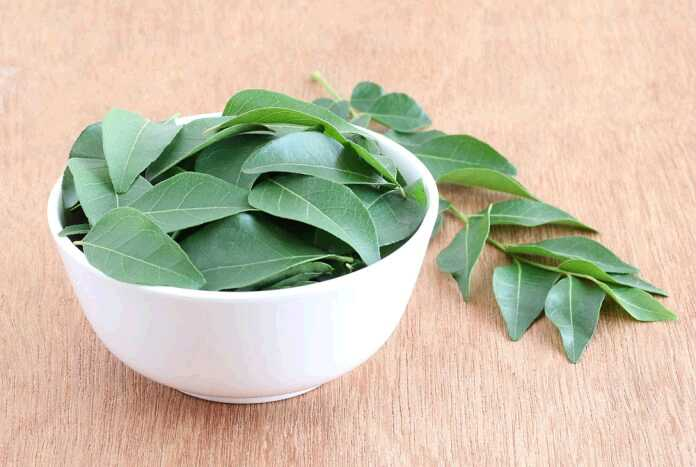 curry-leaves-1